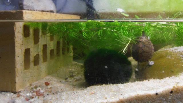 aquaterrarium temporaire 120 litres - tortues Aquaterrariumtemporaire3
