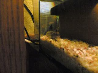 aquarium brackish 150 liter 26042009003