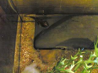 aquarium brackish 150 liter 26042009006