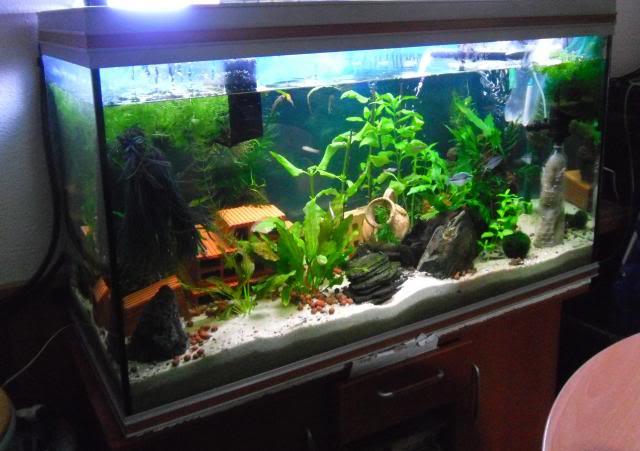 350 litres indonésien Aquarium350litres4