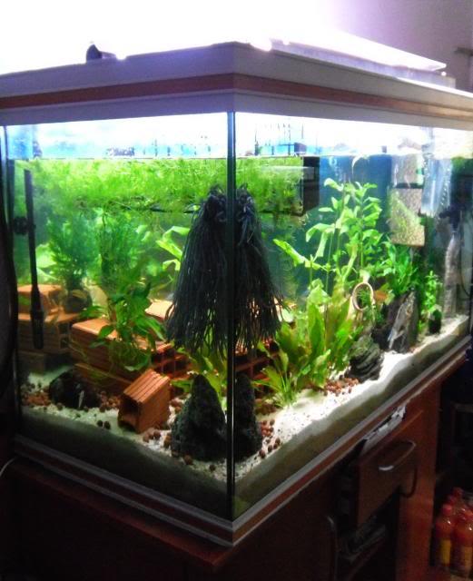 350 litres indonésien Aquarium350litres5
