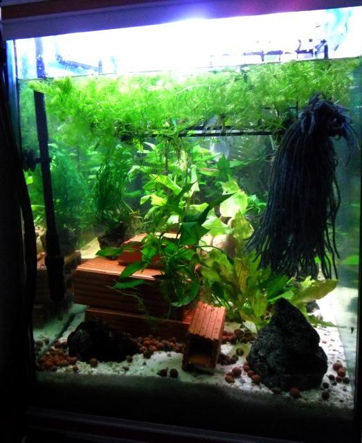 350 litres indonésien Aquarium350litres6