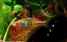 mon aqua 100litres HTHHH