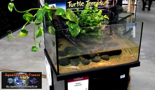 aquaterrarium exo terra turtle IMG_0895
