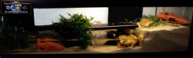 Aquaterrarium pour periophtalmus PA170206