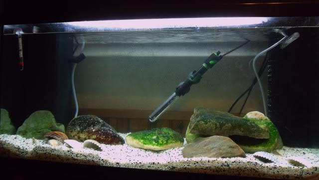 96 litres - Gobies des lacs de Sulawesi Aquariumgobiesulawesi