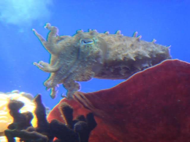 Aquarium publique de Nouméa DSC02314