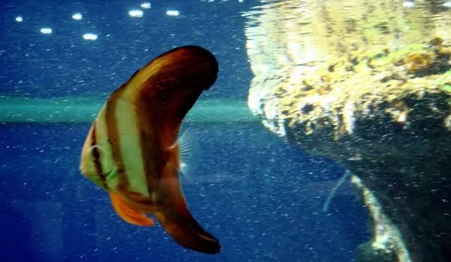 Aquarium publique de Nouméa DSC02317