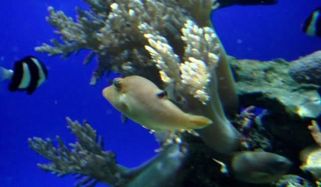 Aquarium publique de Nouméa DSC02319