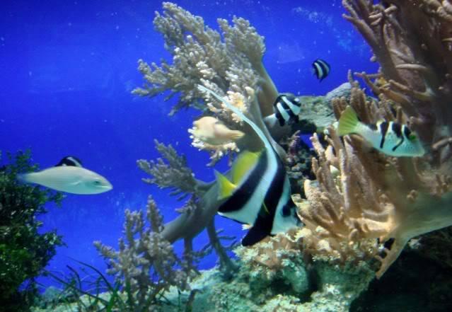 Aquarium publique de Nouméa DSC02322