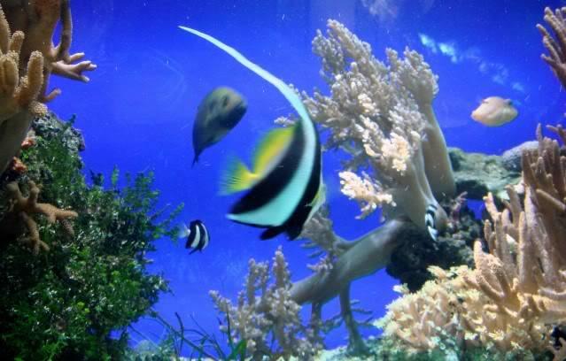 Aquarium publique de Nouméa DSC02323