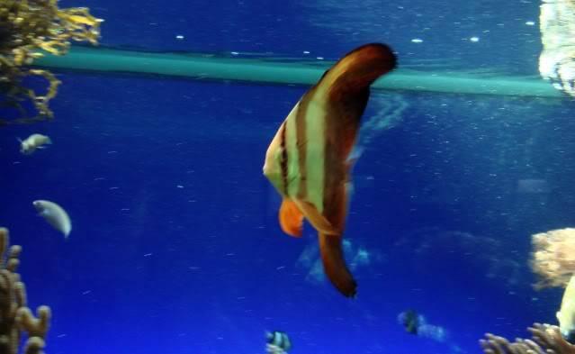 Aquarium publique de Nouméa DSC02324
