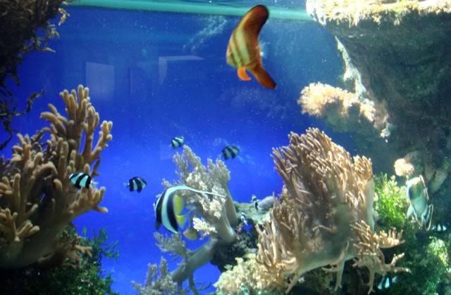 Aquarium publique de Nouméa DSC02326