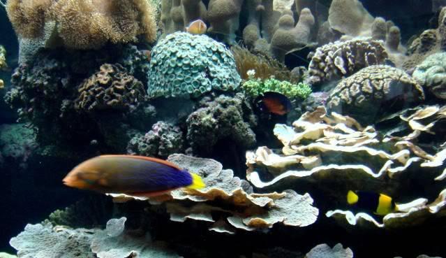 Aquarium publique de Nouméa DSC02337