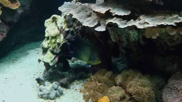 Aquarium publique de Nouméa DSC02338