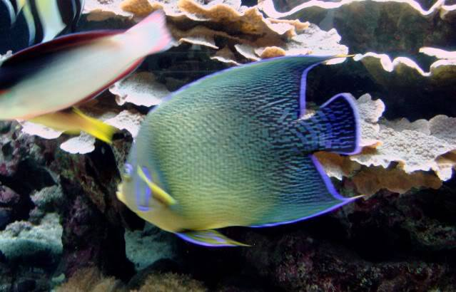 Aquarium publique de Nouméa DSC02339