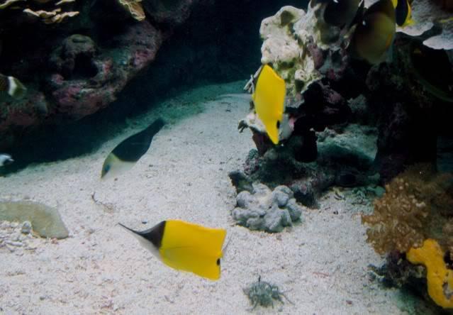 Aquarium publique de Nouméa DSC02340