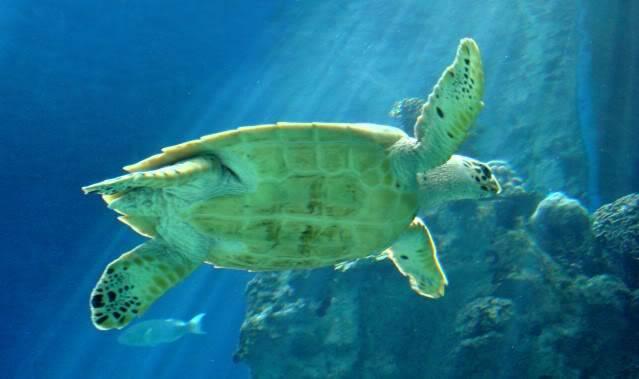 Aquarium publique de Nouméa DSC02378
