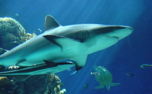 Aquarium publique de Nouméa DSC02380