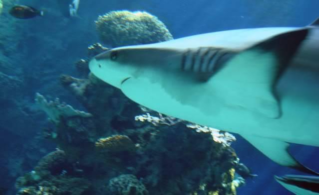 Aquarium publique de Nouméa DSC02382