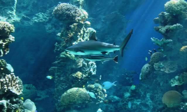 Aquarium publique de Nouméa DSC02383