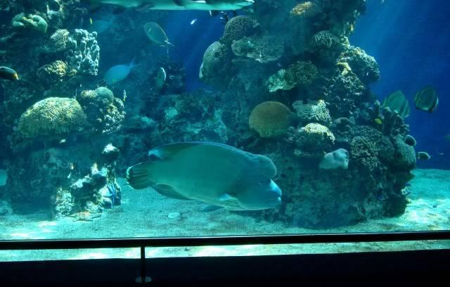 Aquarium publique de Nouméa DSC02384