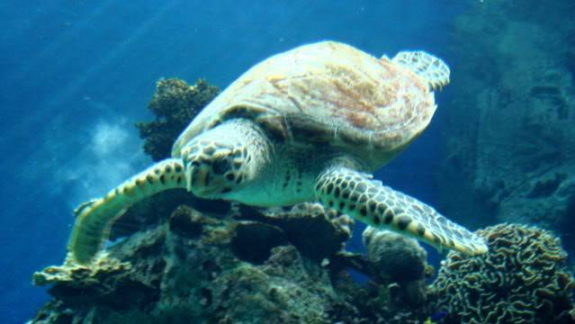 Aquarium publique de Nouméa DSC02388