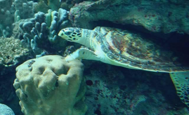 Aquarium publique de Nouméa DSC02394