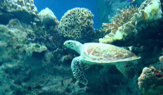 Aquarium publique de Nouméa DSC02395