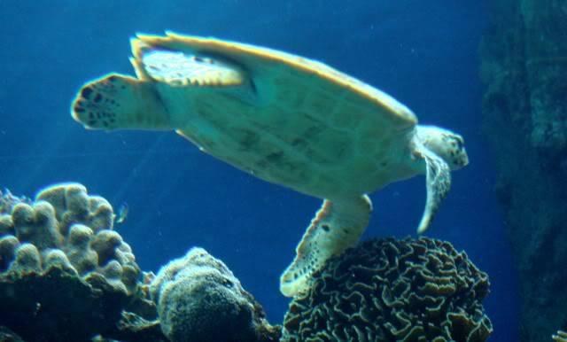 Aquarium publique de Nouméa DSC02396