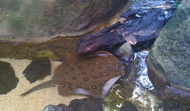 La serre amazonienne - Montpellier Zoolunaret108