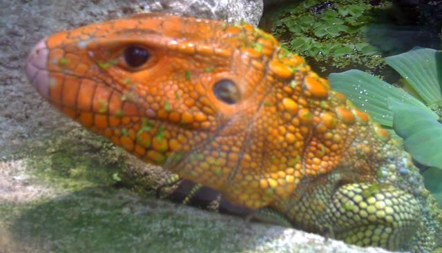 La serre amazonienne - Montpellier Zoolunaret119