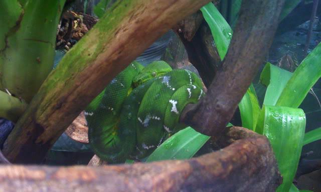 La serre amazonienne - Montpellier Zoolunaret128
