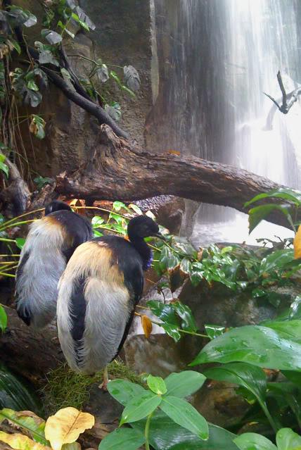 La serre amazonienne - Montpellier Zoolunaret138