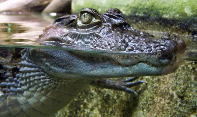 La serre amazonienne - Montpellier Zoolunaret24