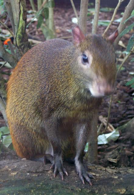La serre amazonienne - Montpellier Zoolunaret38