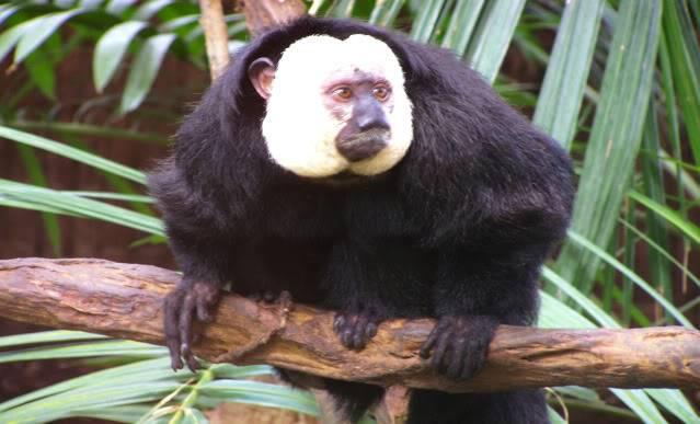 La serre amazonienne - Montpellier Zoolunaret39
