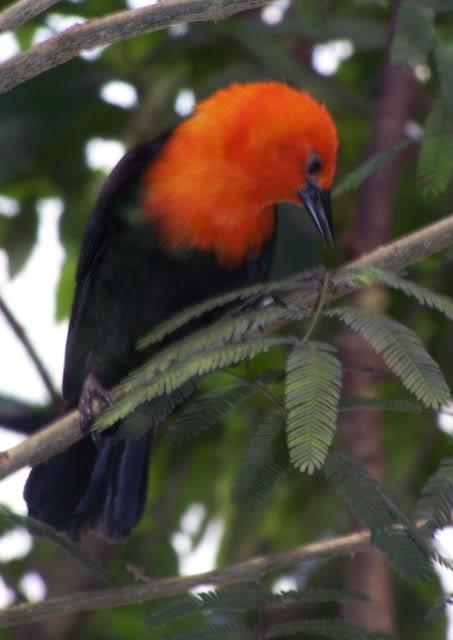 La serre amazonienne - Montpellier Zoolunaret40
