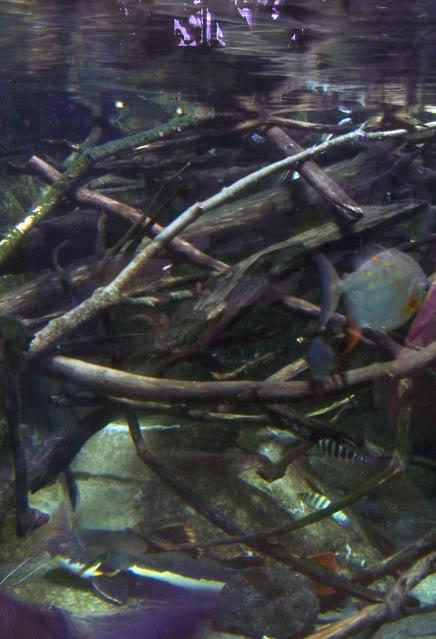 La serre amazonienne - Montpellier Zoolunaret44