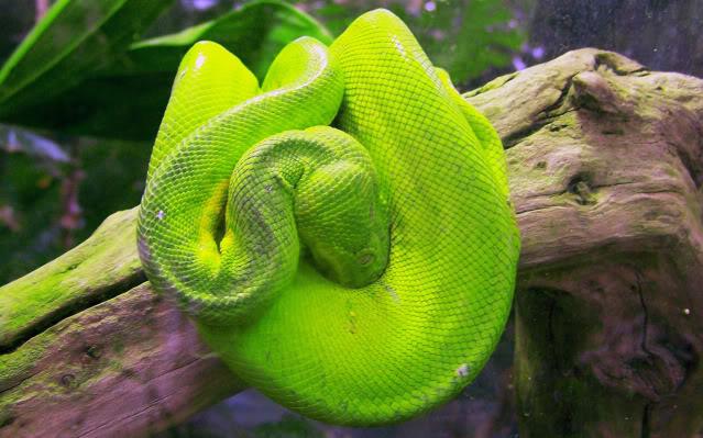 La serre amazonienne - Montpellier Zoolunaret53
