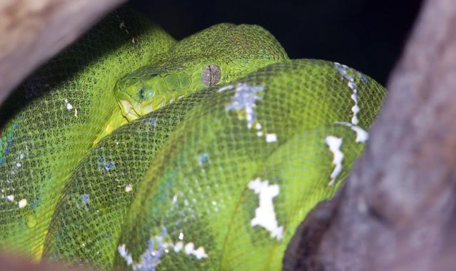 La serre amazonienne - Montpellier Zoolunaret56
