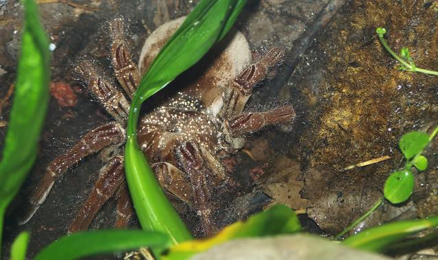 La serre amazonienne - Montpellier Zoolunaret62