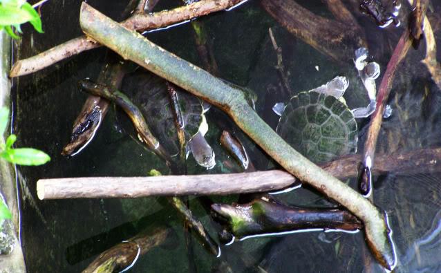 La serre amazonienne - Montpellier Zoolunaret78