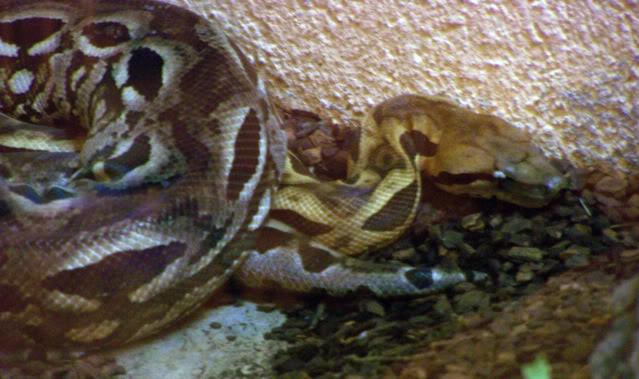 La serre amazonienne - Montpellier Zoolunaret85