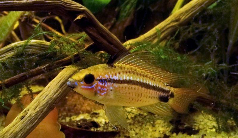 """Concours photos """"le poisson et son environnement aquatique"""" - Oscar le poisson  - vote 2011-11-06223536EremnopygeMle"""