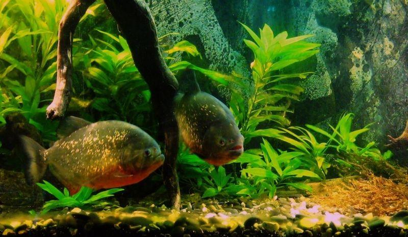 """Concours photos """"le poisson et son environnement aquatique"""" - Oscar le poisson  - vote 994012DCNSX003"""
