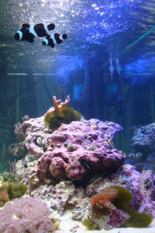 """Concours photos """"le poisson et son environnement aquatique"""" - Oscar le poisson  - vote DSC04218"""