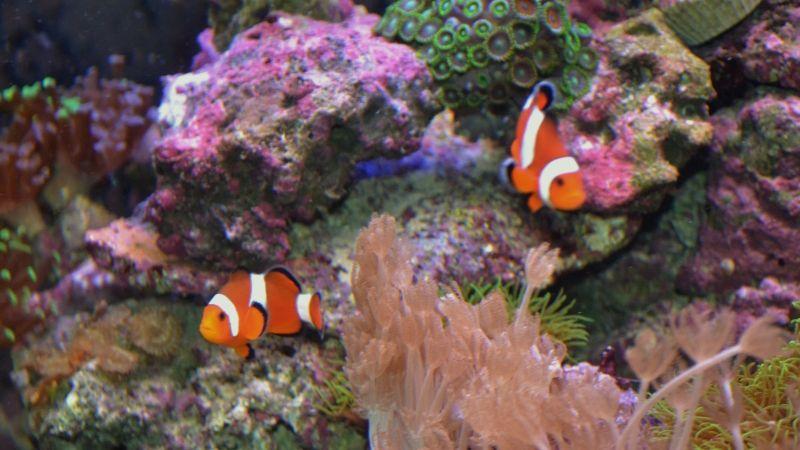 """Concours photos """"le poisson et son environnement aquatique"""" - Oscar le poisson  - vote DSC_1404"""