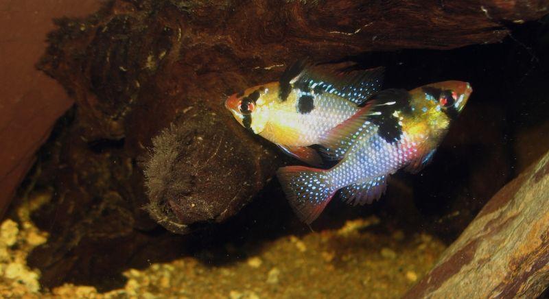"""Concours photos """"le poisson et son environnement aquatique"""" - Oscar le poisson  - vote IMG_3875"""