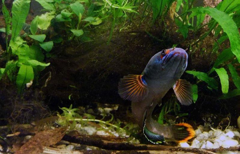 """Concours photos """"le poisson et son environnement aquatique"""" - Oscar le poisson  - vote Concou15"""